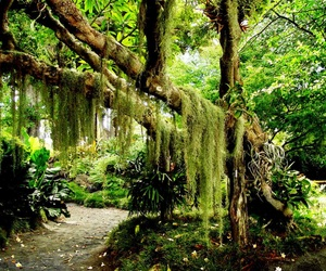 adventure, green, and jungle image