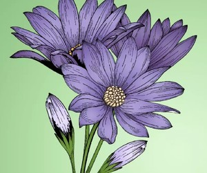 beauty, flowers, and flower image