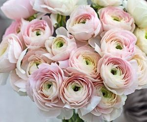bouquet, pink, and pink ranunculus image