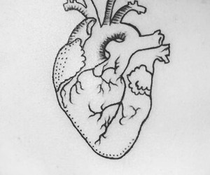 anatomy, heart, and cool image