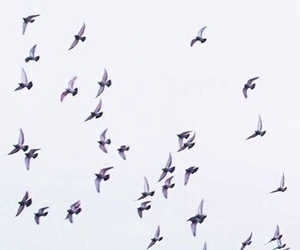 lilac, birds, and theme image