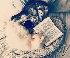 book, read, and cats image