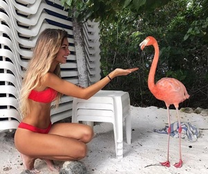 animal, beach sand, and bikini image