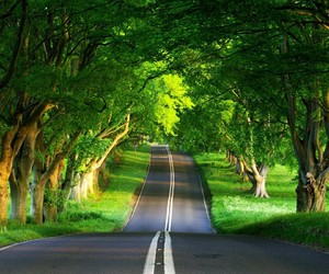 road, nature, and green image