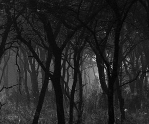 black and white, mist, and trees image
