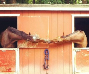 animals, horse, and kiss image