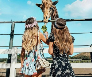 friends, animal, and giraffe image