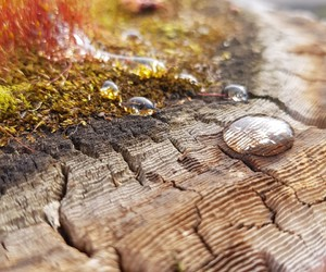 eau, forest, and wood image
