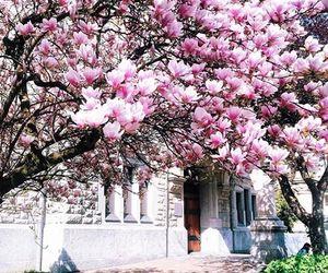 trees, flowers, and magnolia image
