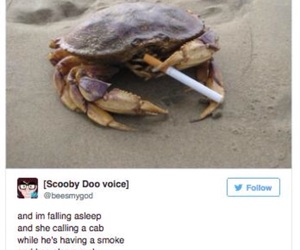 tumblr, crab, and funny image