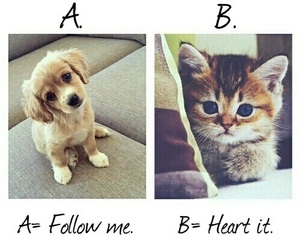 cat, chat, and dog image