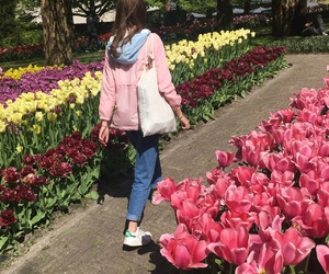colors, flowers, and netherlands image
