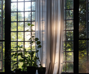 window, nature, and plants image