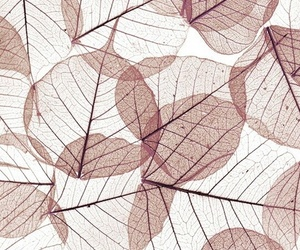 wallpaper, leaves, and background image