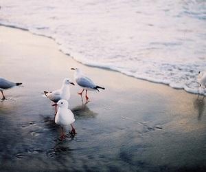 sea, bird, and beach image