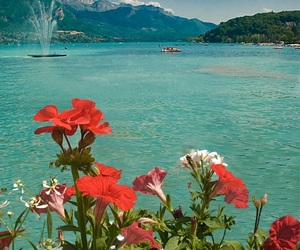 flowers, summer, and ocean image
