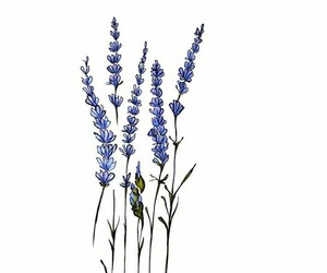 flowers, lavender, and art image