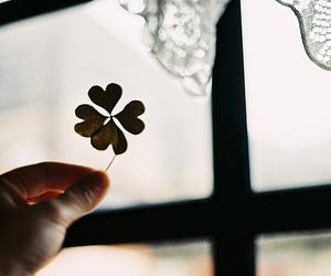 макро цветок image