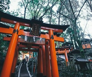 japan, beautiful, and forest image