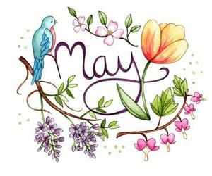may image
