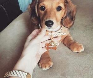 animal, brown, and dog image