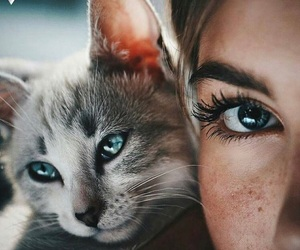 cat, love, and ✨ image