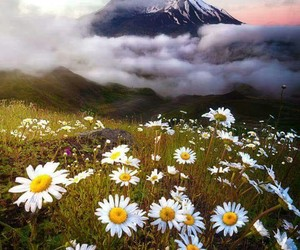 flowers, natureze, and tumblr image