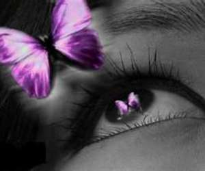 butterfly, purple, and color splash image