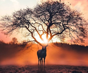 tree, animal, and deer image