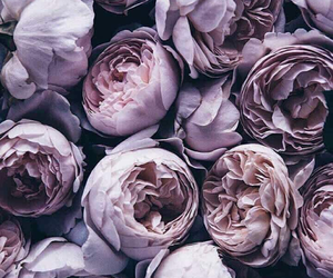 flowers, roses, and violets image