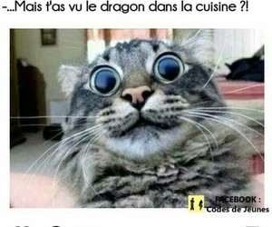 chat, drole, and mdr image