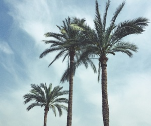 aesthetic, palm, and vintage image