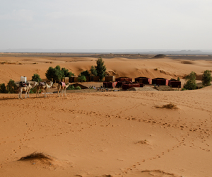 adventure, animals, and camels image