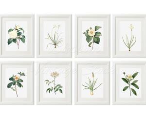 botanical, botanical prints, and botany image