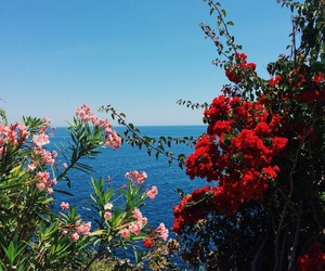 flowers and madeira image