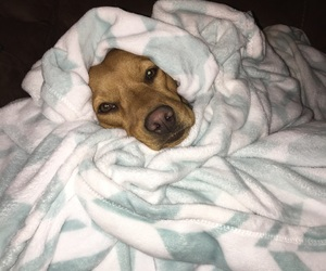 blanket, cute puppy, and dogs image