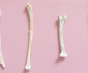 bones, death, and Halloween image