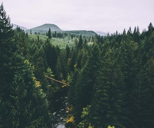 forest and tree image