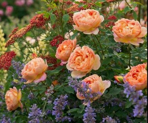 garden, pastel, and peach image