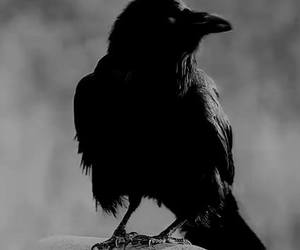 alone, black, and crow image