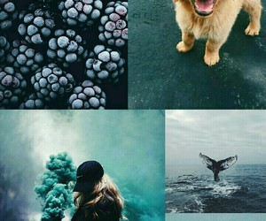 Collage, colors, and sea image