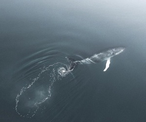 whale, water, and animals image
