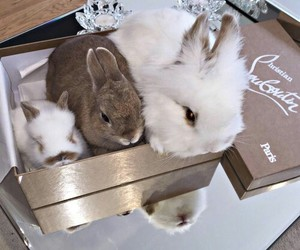 bunnies, christian louboutin, and fashion image