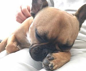 alex pettyfer, french bulldog, and puppy image