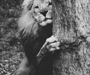 lion, animal, and nature image