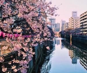 japan, sakura, and japanese street image