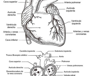 anatomia, estudiante de medicina, and dreams image