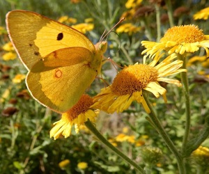 yellow, butterfly, and flowers image