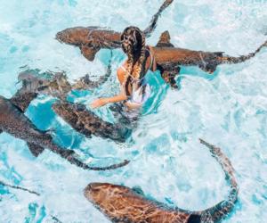 shark, travel, and animals image