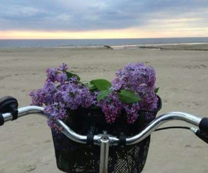 bike, flor, and flowers image